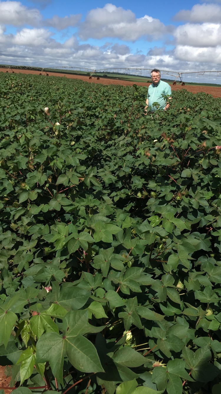 Paranapanema Cotton Field with Owen